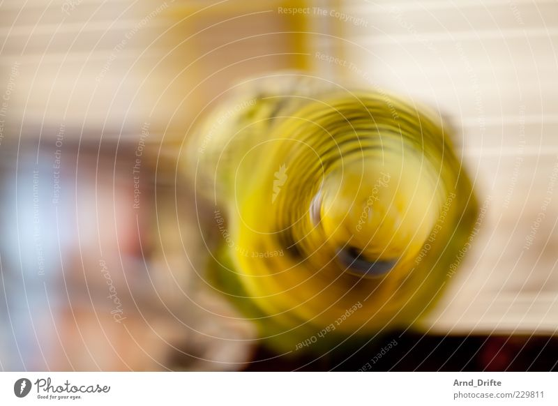 Bang your head to this! Animal Pet Bird Wing 1 Movement Romp Yellow Green Budgerigar Head Colour photo Interior shot Abstract Long exposure Motion blur