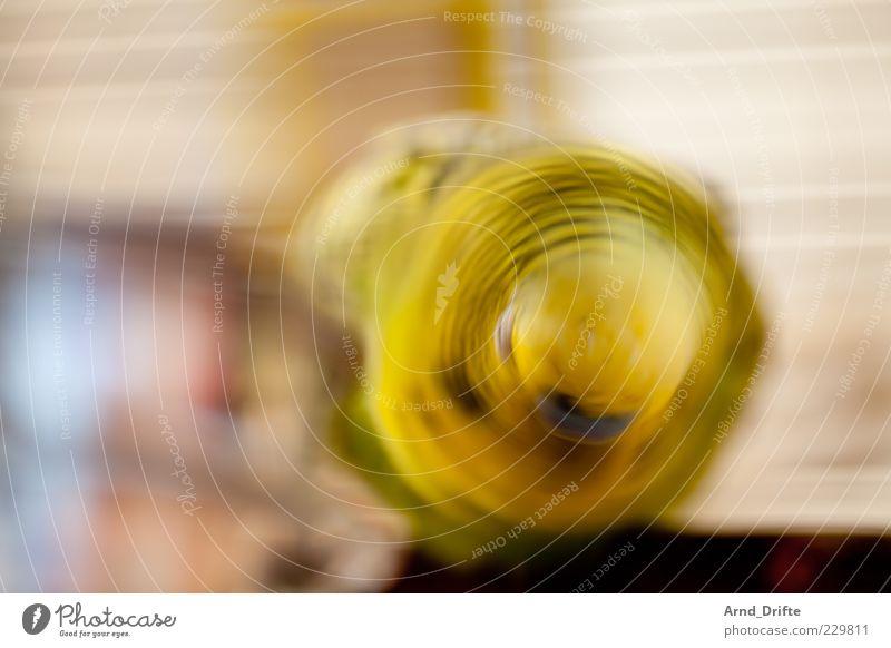 Green Animal Yellow Movement Head Bird Speed Wing Pet Romp Exposure Abstract Budgerigar Shake of the head
