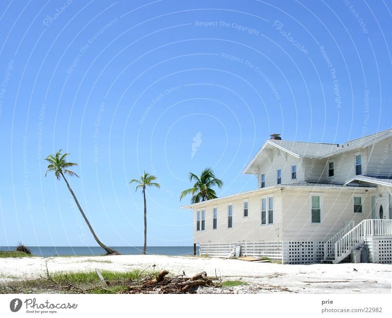 Water Beautiful Sky White Ocean Beach House (Residential Structure) Relaxation Sand Horizon Travel photography Idyll Palm tree Beautiful weather Blue sky
