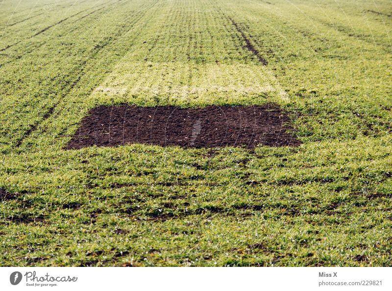 U f o - Parking place Earth Spring Winter Plant Grass Meadow Field Growth Sharp-edged Brown Green Hollow Margin of a field Sprout Agriculture Sow Colour photo