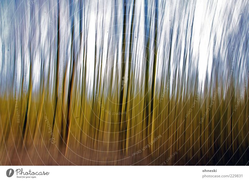 forest Environment Nature Sky Tree Tree trunk Forest Green panning Colour photo Experimental Day Long exposure Motion blur Blur Whimsical Deserted Exterior shot