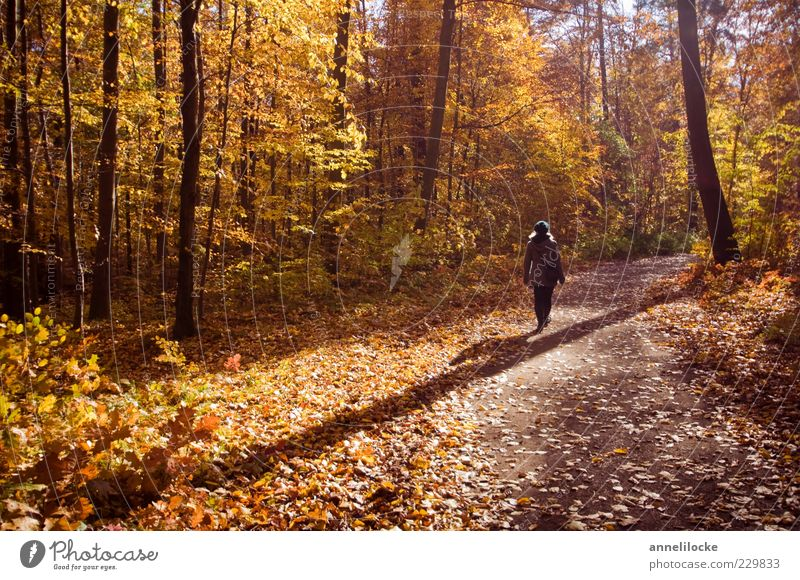 autumn walk Leisure and hobbies Trip Hiking Human being Woman Adults 1 Environment Nature Landscape Autumn Climate Weather Beautiful weather Forest