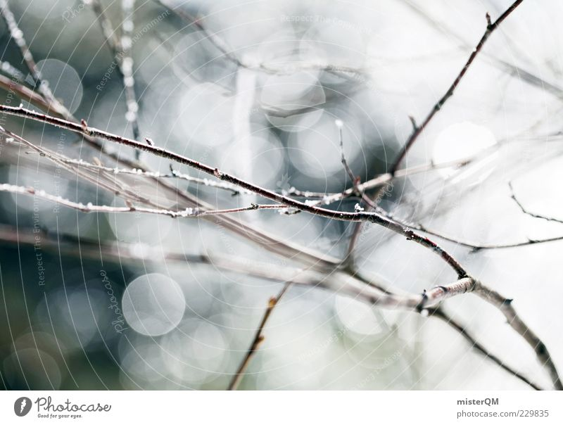 Nature Plant Winter Calm Environment Spring Background picture Wet Esthetic Growth Thin Beautiful weather Dew Harmonious Glare effect Branchage