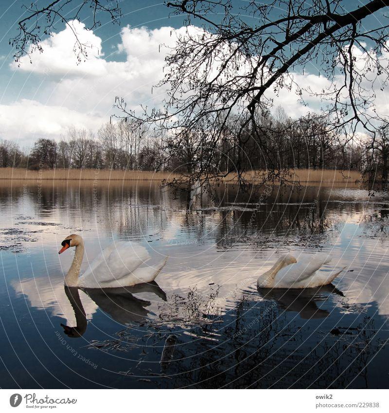 Sky Nature Plant Water Tree Landscape Clouds Calm Animal Environment Spring Movement Swimming & Bathing Lake Bird Horizon