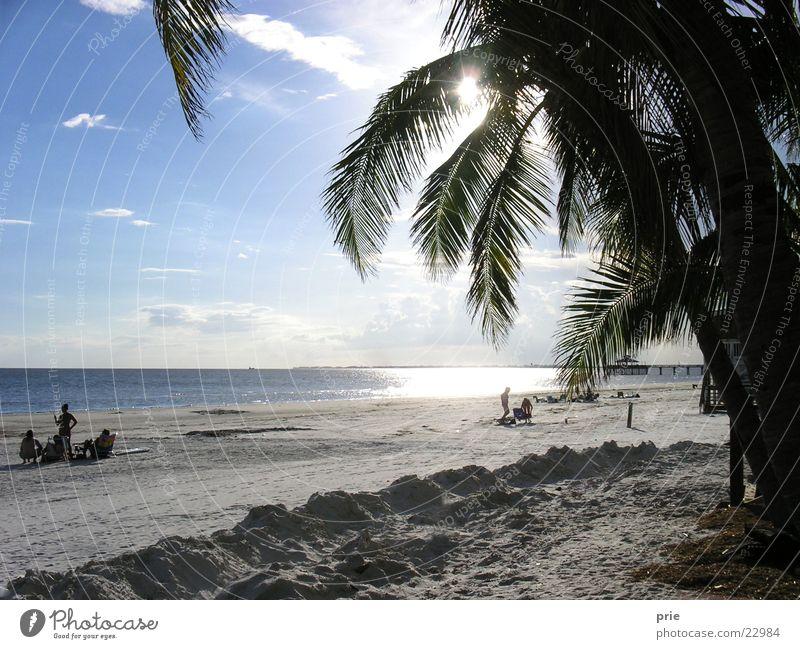 On the beach Beach Ocean Palm tree Sand Sun Sky