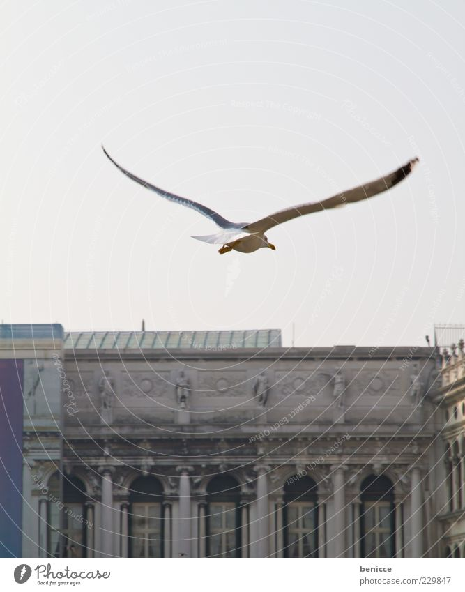 Birdy Seagull Flying Flight of the birds Venice Italy St. Marks Square Wing Vantage point Search Looking Wind Power Force Arch Tourist Attraction Copy Space top