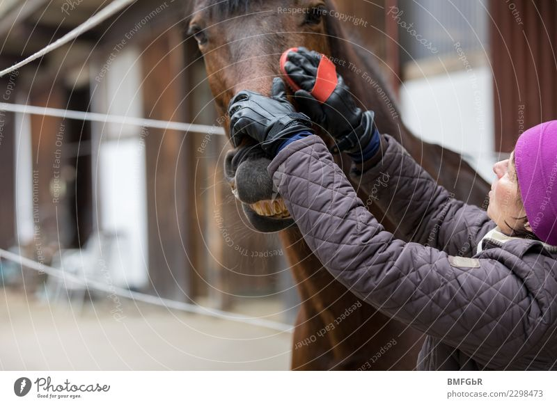 Woman Human being Animal Joy Adults Lifestyle Funny Emotions Sports Happy Authentic Happiness Touch Cleaning Horse Pet