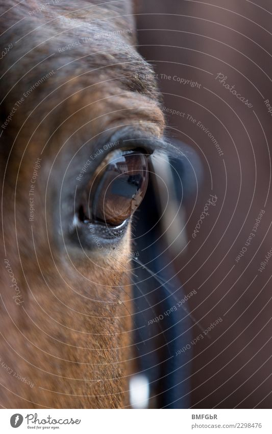 Mirror of the horse soul Sports Equestrian sports Ride Animal Pet Farm animal Horse Horse's eyes Eyes Eyelash 1 Observe Looking Authentic Glittering Brown