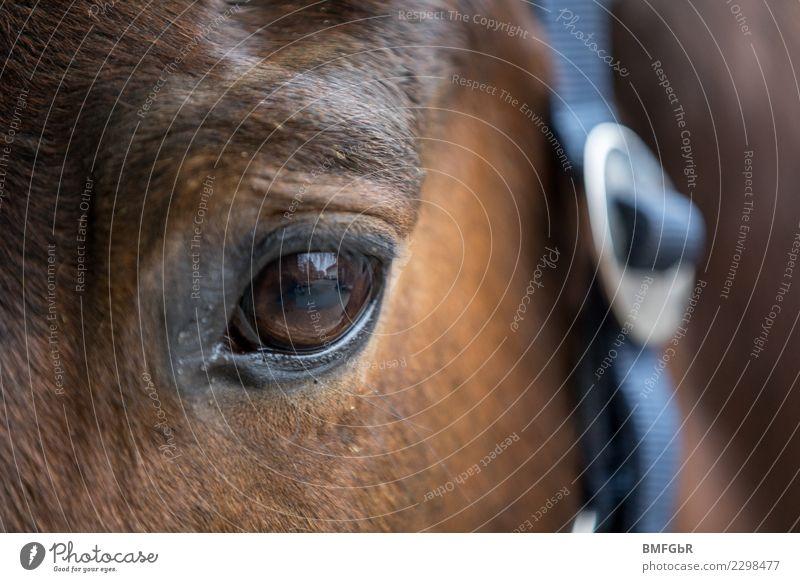 Beautiful Animal Eyes Sports Brown Contentment Head Observe Horse Serene Pet Eyelash Farm animal Ride Equestrian sports Parts of body
