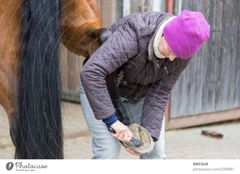 Work on the horse Lifestyle Happy Leisure and hobbies Ride Sports Equestrian sports Human being Woman Adults 1 30 - 45 years Jacket Cap Animal Pet Farm animal