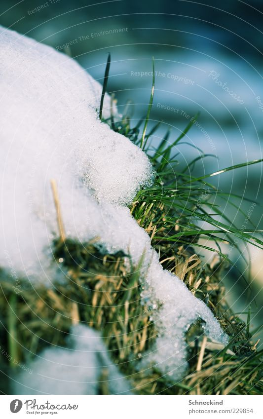 Winter vs. Spring Environment Nature Plant Ice Frost Snow Grass Foliage plant Cold Natural Green White Calm Seasons Growth Thaw Melt Exchange Colour photo
