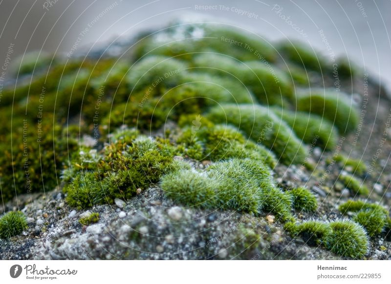 Microbial land. Fragrance Nature Plant Moss Foliage plant Wild plant Rock Stone Natural Gray Green Life Soft Blur Disperse Distribute Covered Living thing