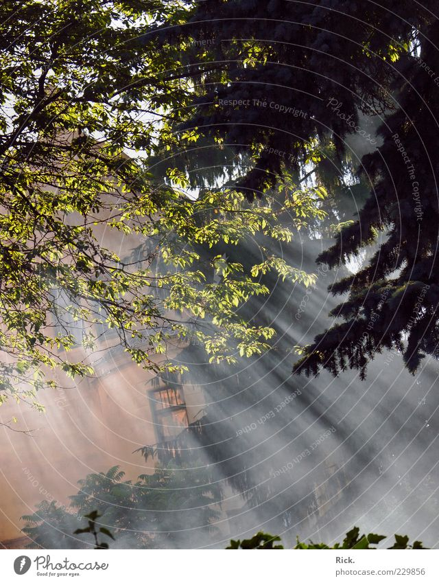 Wafts of mist. House (Residential Structure) Environment Nature Plant Elements Air Water Sun Sunlight Summer Tree Leaf Forest Deserted Detached house