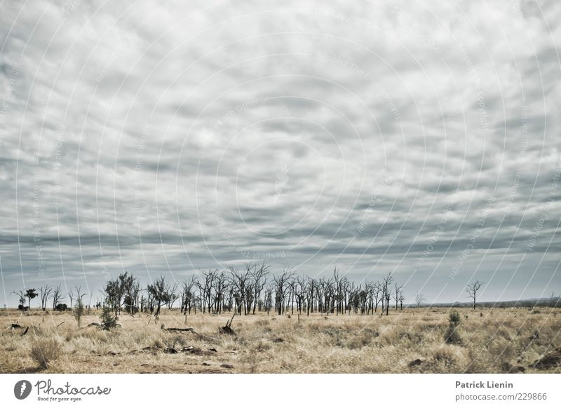 Sky Nature Plant Clouds Loneliness Far-off places Environment Landscape Gray Grass Warmth Air Weather Wind Climate Gloomy