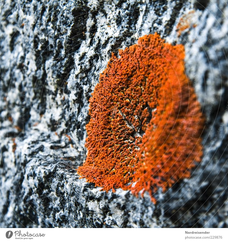 Nature Plant Colour Life Stone Background picture Esthetic Climate Growth Observe Pure Discover Moss Hard Modest Granite