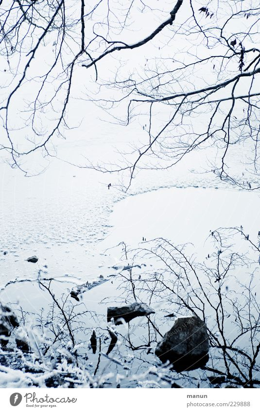 Nature Water Winter Cold Snow Stone Ice Natural Cool (slang) Frost Lakeside Stagnating Branchage Delicate Twigs and branches Leafless
