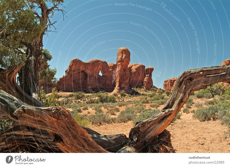 Elephantös Arches National Park Utah USA Rock Stone Rock formation Destination Natural phenomenon Tourist Attraction