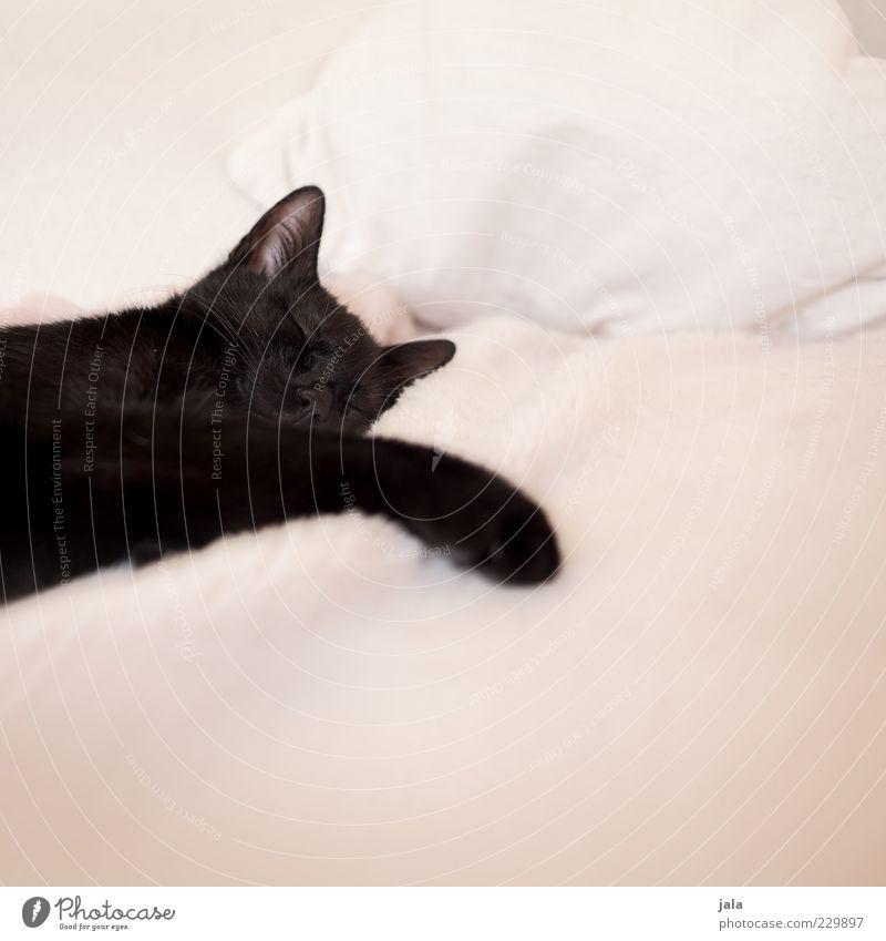 Animal Cat Dream Baby animal Sleep Break Cute Animal face Pelt Paw Pet Cushion Duvet Whisker