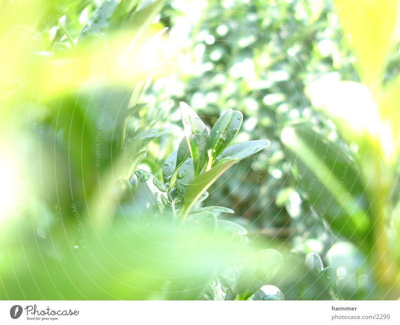 Green Leaf Drops of water Near