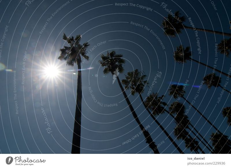 backlight Lifestyle Environment Nature Sky Sun Sunlight Summer Plant Exotic Palm tree Idyll Surrealism Colour photo Exterior shot Day Light Shadow Contrast