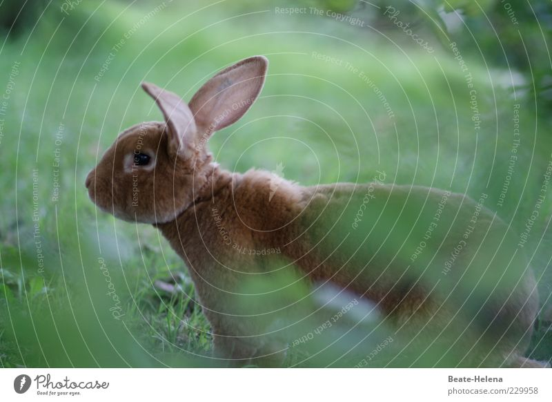 Nature Beautiful Joy Happy Funny Brown Sit Happiness Wild animal Desire Animal face Friendliness Hare & Rabbit & Bunny Watchfulness Positive Cuddly