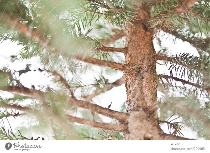christmas tree after christmas Environment Nature Plant Tree Foliage plant Green Colour photo Tree trunk Tree bark Coniferous trees Fir branch Deserted Blur