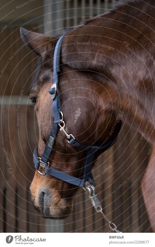 Beautiful Animal Joy Lifestyle Sports Happy Contentment Power Authentic Observe Horse Serene Pet Box Peaceful Farm animal