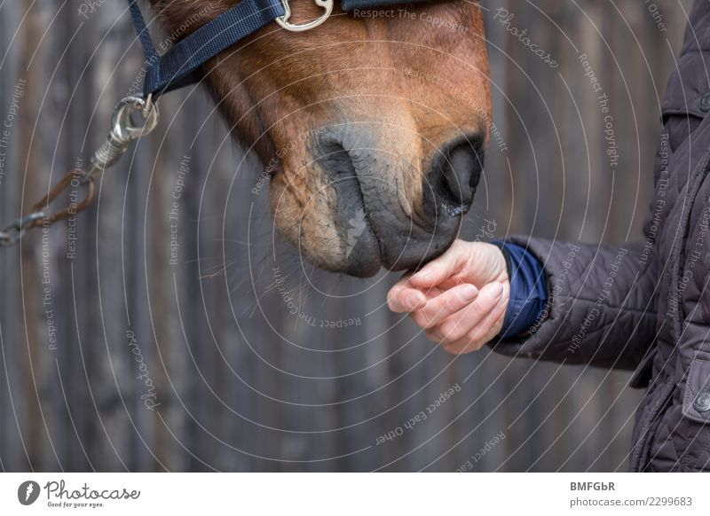 Friendship between horse and rider Lifestyle Happy Leisure and hobbies Ride Sports Equestrian sports Human being Feminine Woman Adults Hand 1 Jacket Animal Pet
