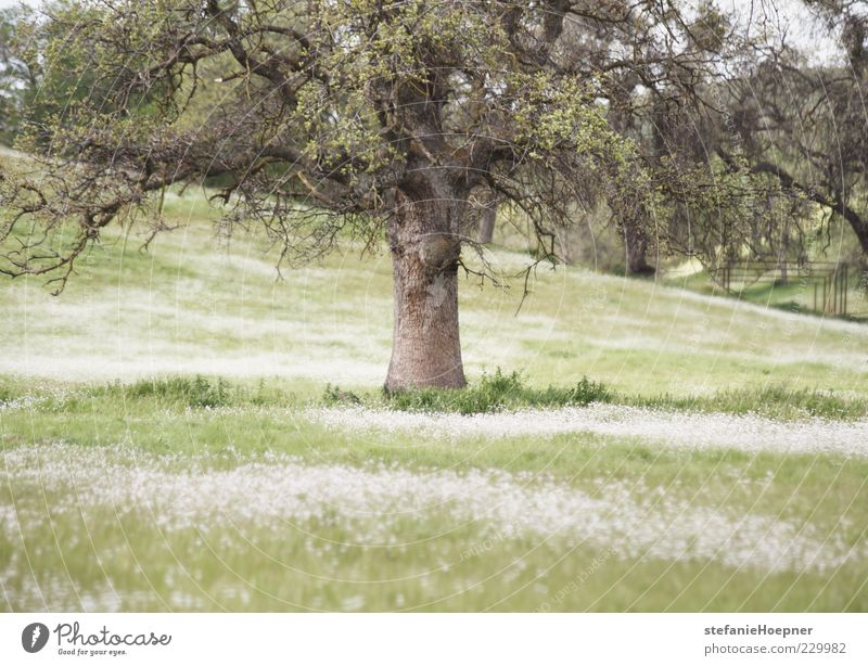 Nature Green Tree Plant Summer Relaxation Meadow Environment Landscape Grass Garden Spring Dream Moody Park Contentment
