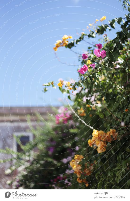 Plant Flower Relaxation Garden Blossom Wall (barrier) Esthetic Growth Romance Blossoming Beautiful weather Spain Wanderlust Blue sky Portugal Cloudless sky