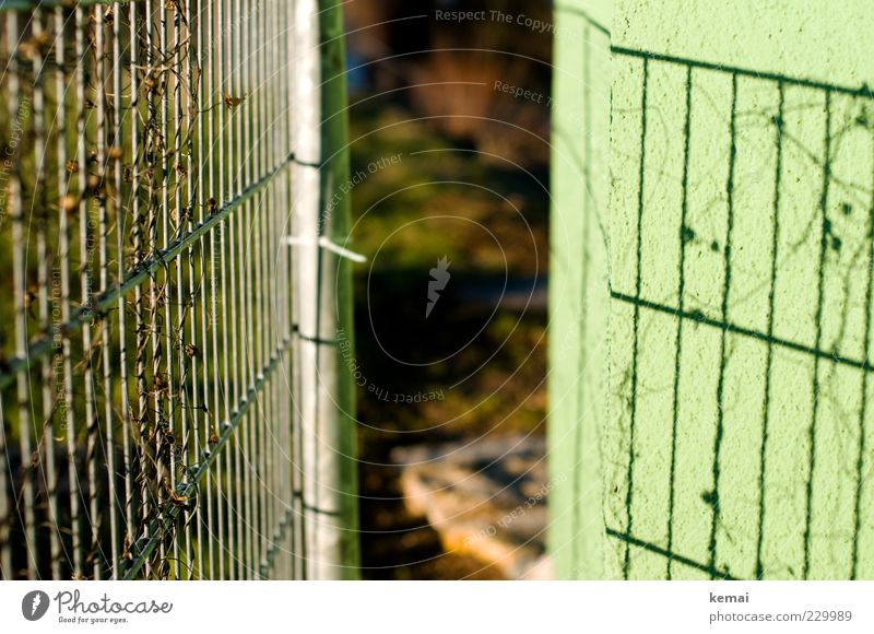 Fence and its shadow Environment Nature Plant Sun Sunlight Beautiful weather Tendril Wall (barrier) Wall (building) To dry up Growth Bright Green Barrier