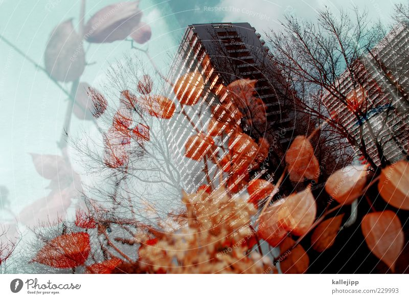 Nature Plant Leaf Window Architecture Blossom Art Orange Design High-rise Bushes Romance Flower Treetop Double exposure Nostalgia
