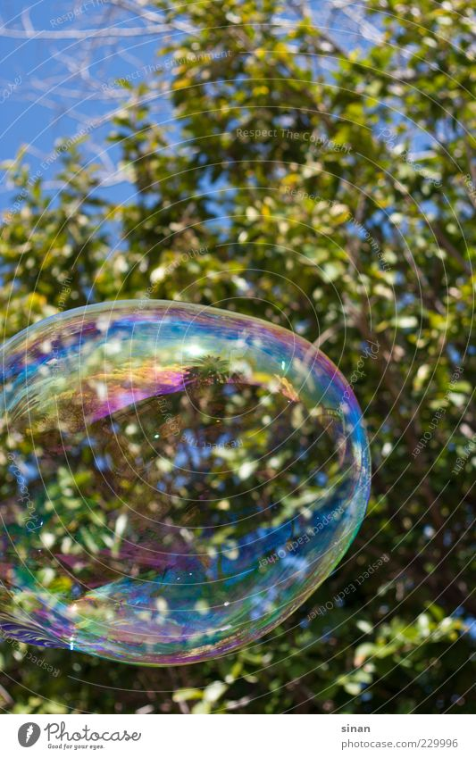 big bubble Tree Soap bubble Green Nature Water Glittering Smear Playing Happiness Sky Day Colour photo South Spain Art Reflection Blue Bubble Round Joy