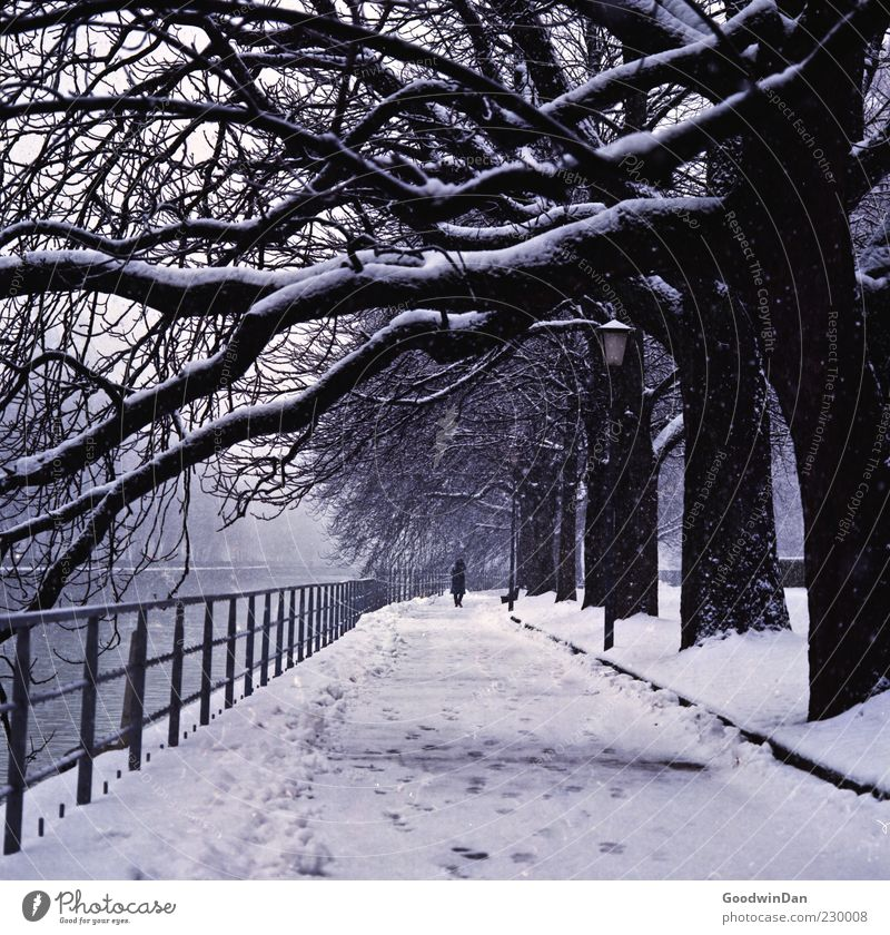 a winter tale Human being Masculine 1 Environment Nature Elements Winter Climate Weather Gale Ice Frost Snow Snowfall Tree Park River Old Authentic Exceptional