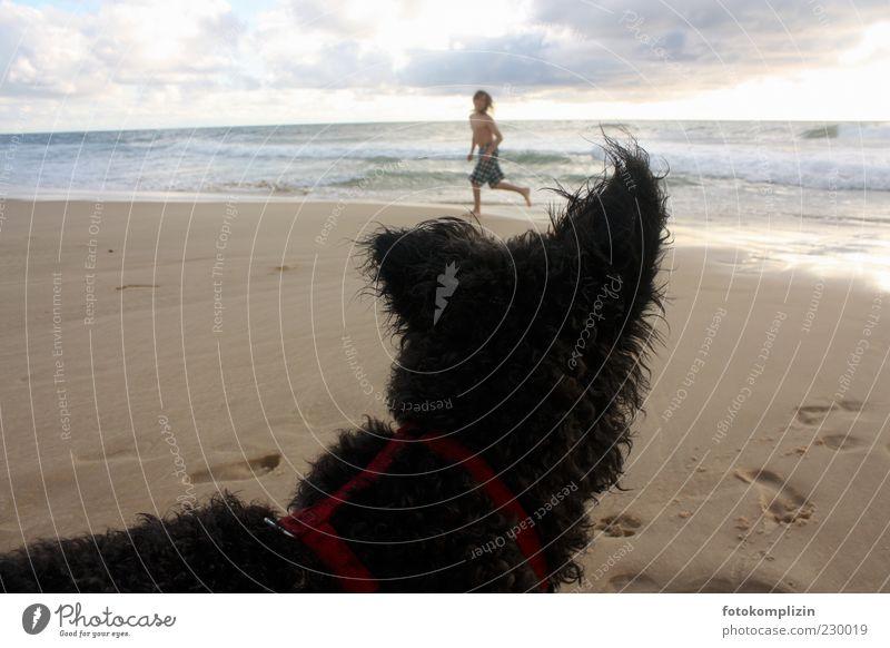Child Dog Summer Beach Joy Animal Life Playing Freedom Friendship Infancy Running sports Curiosity Pelt Tracks Footprint