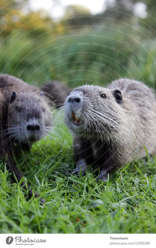 Nature Green Animal Environment Natural Grass Park Nutria