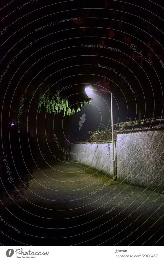 Green Tree Leaf Dark Black Lighting Lamp Romance Things Street lighting Treetop Surrealism Night shot