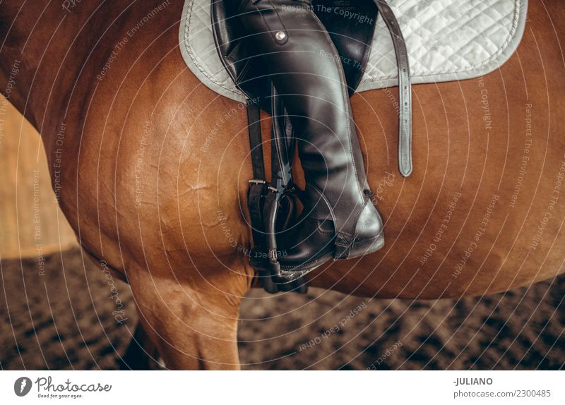 Close up of woman sitting on horseback with riding boots Lifestyle Ride Human being 30 - 45 years Adults Animal Farm animal Horse One animal Advice