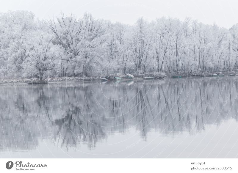 icy silence Winter Environment Nature Landscape Plant Forest Lakeside Rowboat Cold White Sadness Grief Death Bizarre Loneliness Idyll Climate Religion and faith