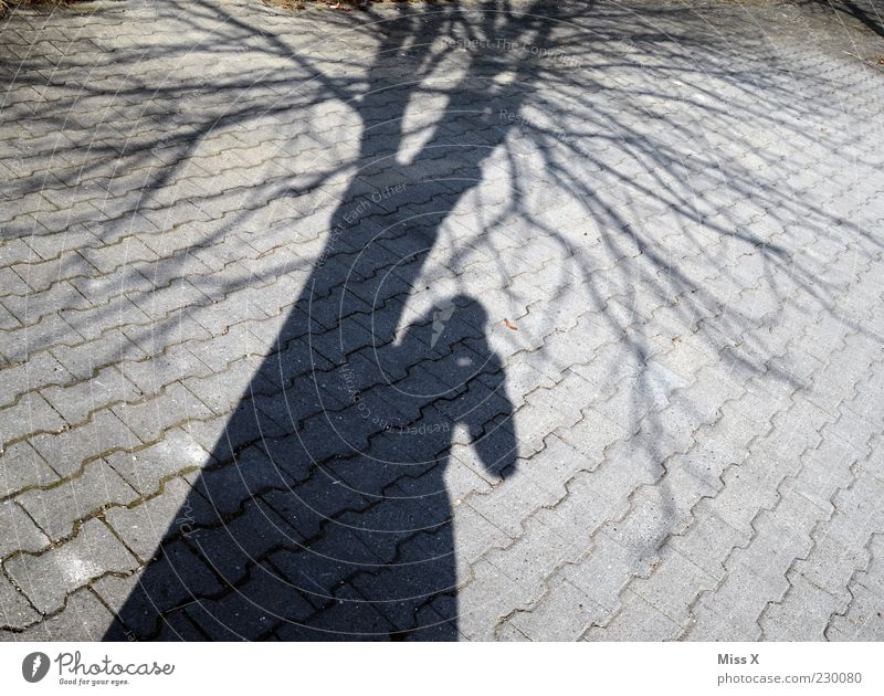 Human being Tree Winter Bright Photography Branch Tree trunk Photographer Copy Space Paving stone Take a photo Lean Twigs and branches Profession
