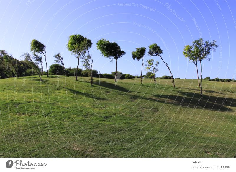 Golf course with trees Environment Nature Landscape Plant Sky Cloudless sky Summer Beautiful weather Tree Foliage plant Park Meadow Hill Esthetic Blue Green