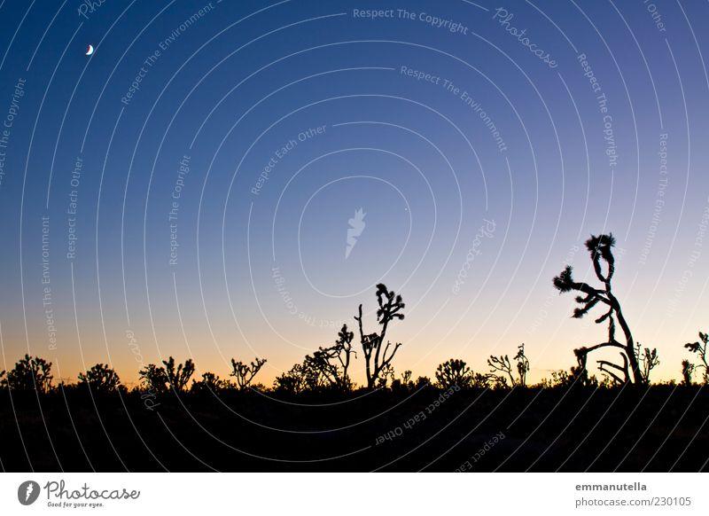 Mojave Desert, California, USA Vacation & Travel Freedom Summer Landscape Plant Sky Cloudless sky Night sky Moon Cactus yoshua tree Americas Emotions Moody