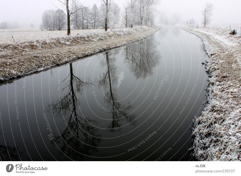 winter magic Landscape Water Winter Ice Frost Loneliness Exterior shot Day River bank Water reflection Cold Deserted Tree