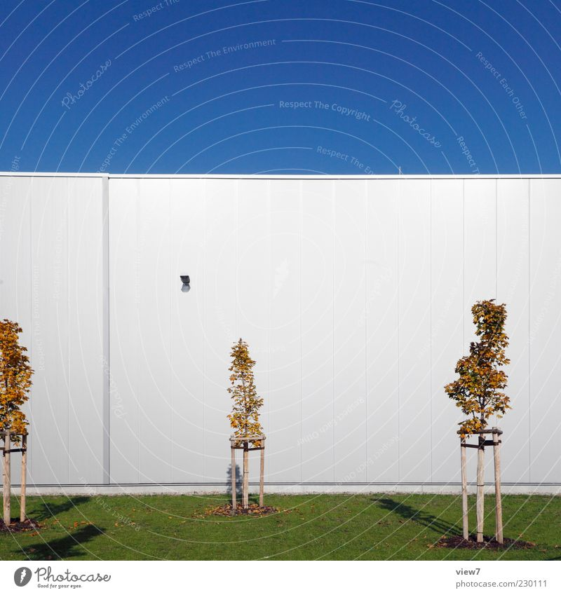 Sky Nature Tree Loneliness House (Residential Structure) Wall (building) Architecture Wall (barrier) Building Metal Line Facade Elegant Arrangement Fresh Modern
