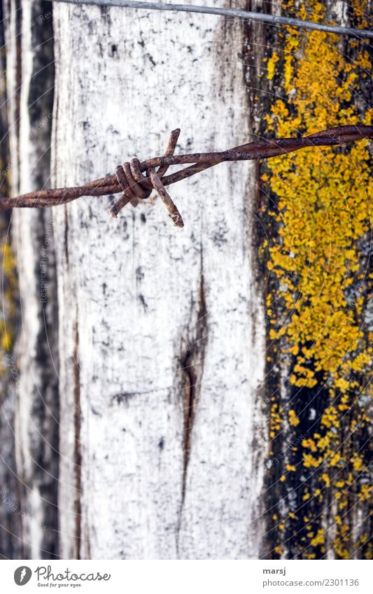Rust spine before moss growth Moss Barbed wire fence Wire Aggression Authentic Dark Hideous Thorny Gloomy Sadness Concern Grief Death Reluctance Pain Longing