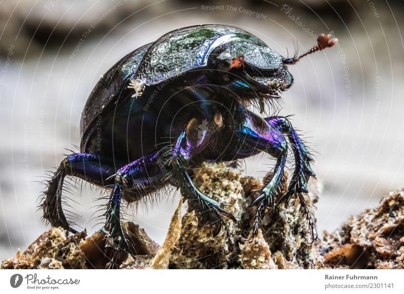Nature Animal Wild animal Walking Crawl