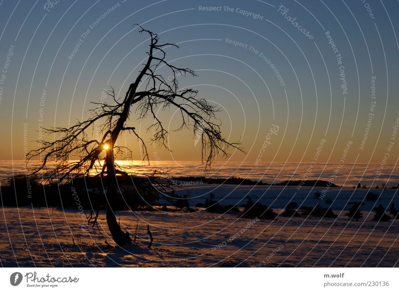 Nature Blue Tree Plant Sun Winter Calm Loneliness Far-off places Yellow Snow Environment Landscape Freedom Moody Fog