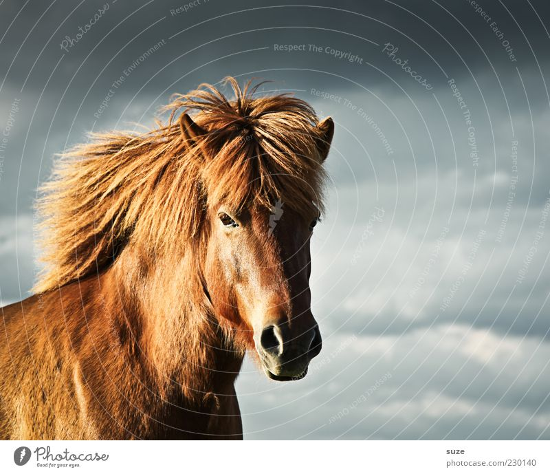 Sky Clouds Animal Environment Moody Weather Wind Wait Natural Wild Esthetic Wild animal Climate Stand Horse Cute