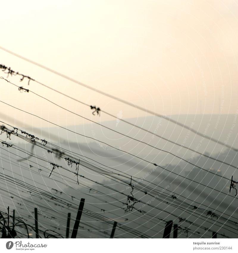Sky Yellow Environment Landscape Orange Vine Hill Beautiful weather Diagonal Fence Harvest Wire Bleak Haze Weather Sunset