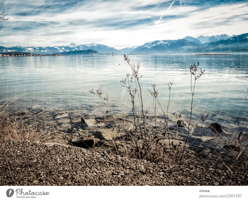 Lake Zurich Well-being Contentment Environment Nature Landscape Plant Animal Air Water Climate Beautiful weather Grass Bushes Mountain Peak Snowcapped peak
